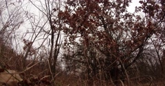 a Tree With Burgundy Leaves Growing on the Lawn Near the Bare Trees - stock footage