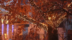 tree crown entwined with a garland - stock footage