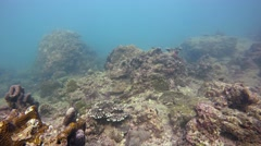 Tropical Fish and Live Coral in the Wild. Video 3840x2160 Stock Footage