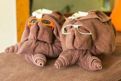 Dog folded from brown towel,wear eye glass ans flower on head at spa Stock Photos