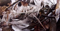 The Defrost Water Runs Across Frozen Leaves in the Forest Stock Footage