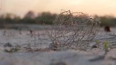 Tumbleweed on sand and girl's legs Stock Footage