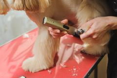 Dog paw grooming - stock photo