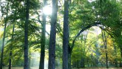 Trees in green fresh forest and sun shine in park Stock Footage
