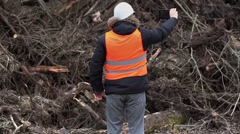 Forest inspector filmed near to pile sawed bushes and strains - stock footage