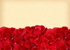 Beautiful red rose petals on old yellow paper Stock Photos