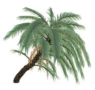 Wild or Senegal date palm tree, phoenix reclinata - 3D render Stock Illustration