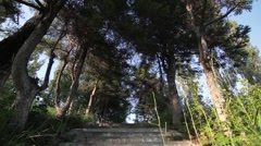 Alley with ladders left in a small park with old trees and green grass Stock Footage