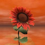 Beautiful red sunflower - 3D render Stock Illustration