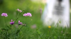 White stone crosses in a cemetery of unknown heroes and pink flowers - stock footage