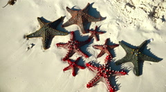 Starfishes on sand seashore composition. Sea Beach travel concept background Stock Footage