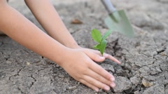 Planting seedling to the soil - stock footage
