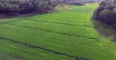 Aerial view over green rice field on Siargao Island, Philippines Stock Footage