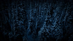 Flying Past Frozen Wilderness Trees Stock Footage
