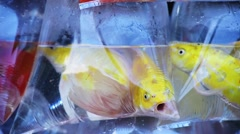 Colourful and different aquarium fish in the fish market Stock Footage
