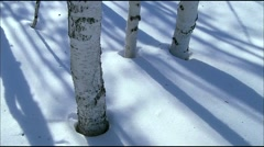 The shadow of a tree in the snow,time lapse Stock Footage