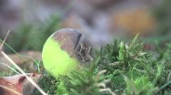 Rotten apple lying on green grass greenhouse  4k Stock Footage