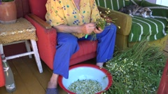 Old hand pick herbal camomile in bowl. Cat sleep armchair. 4K Stock Footage
