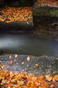 Creek with Fallen Autumn Leaves on Boulders Stock Photos