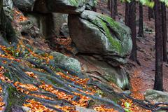 Tree Roots and Boulders on Mountain Slope - stock photo