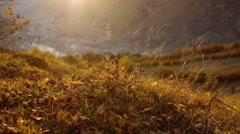 Autumn grass in the mountains sunset Stock Footage
