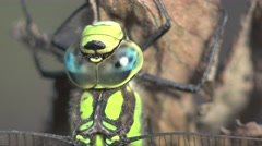 Dragonfly insect macro sits on dry leaves in the forest, meadow Stock Footage