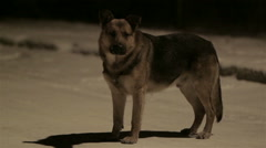 Dog at night in winter Stock Footage