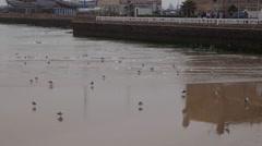 Walking seagull on beach, Morocco, Essaouira Stock Footage