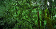 Scenic nature background of trees covered with moss in deep wet forest Stock Footage