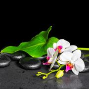 beautiful spa background of white orchid flower, phalaenopsis, green leaf wit - stock photo