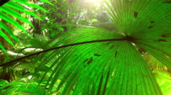 Large green leaf of tropical plant under sunlight in jungle rainforest - stock footage