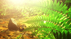 Leaves of green ferns near shallow creek and bright yellow sunlight - stock footage