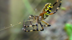 Spider weaves a web of - stock footage