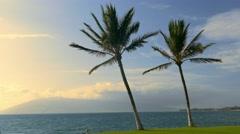 Beach Palm Tree Nature Tranquil Island Sea Tropical Sky Travel Footage Beautiful Stock Footage