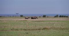 Rhino Scenic Stock Footage