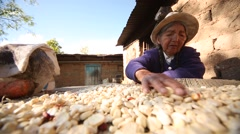 Old farmer woman in South America in a farm in the Andes of Peru Stock Footage