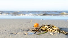 Yellow amber on the beach Stock Footage