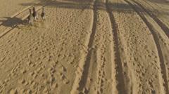 Aerial View of Three donkeys running in desert Stock Footage