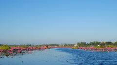 Boat trip to the sea of red lotus, Udon Thani, Thailand Stock Footage