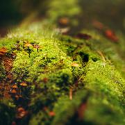 Moss Close Up View with Little Mushrooms Stock Photos