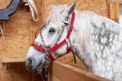 One horse gray-white Stock Photos