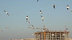 Flock of birds flying over an area of new construction  - stock footage