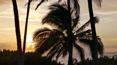 Palm Tree Nature Tranquil Beach Sea Tropical Island Sky Travel Footage Beautiful Stock Footage