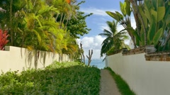 Palm Tree Green Plant Growth Nature Beach Tranquil Surrounding Wall Footpath Arkistovideo