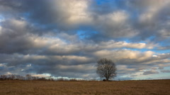 4k timelapse of withered tree and grassland under cloudy sky - stock footage