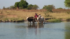 Family crossing small river sitting in a Zebu cart Stock Footage