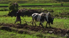 Man behind wooden plow with whip work on rice fields in highlands Stock Footage