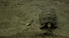 Tortoise Crawling on the Beach - Really slow movement Stock Footage