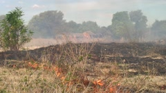 Slash and burn agriculture in front of village Stock Footage