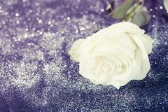 White rose on sparkling glitter background Kuvituskuvat